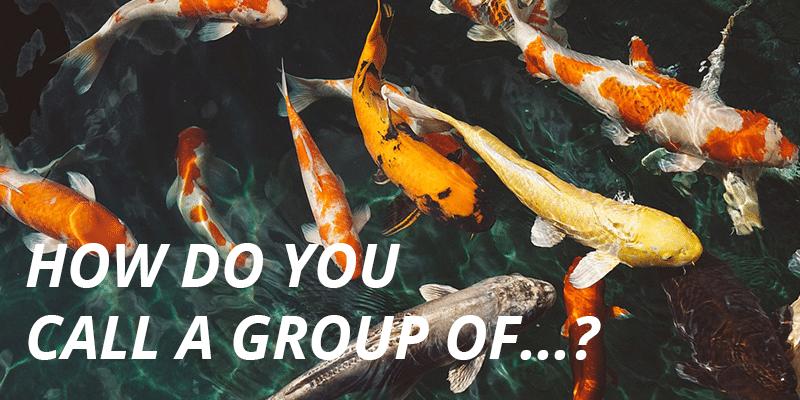 Kako se kaže grupa...?