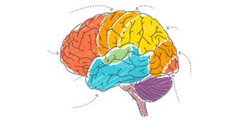 Gde se u mozgu nalaze centri za maternji i strani jezik i kako oni funkcionišu?